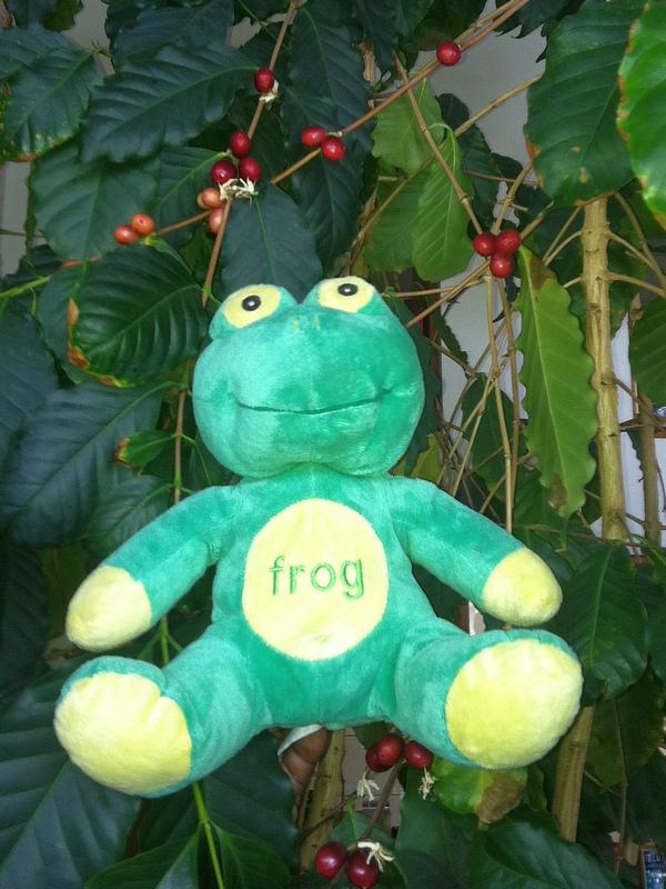 FrogQatVisionsEspressoInTheirCoffeeTree