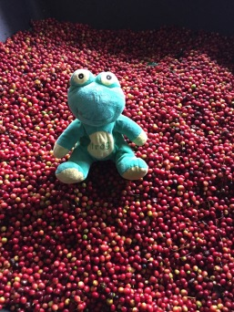 Frog Q inspects the Cherry