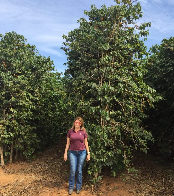 Sandra standing next to a tall coffee tree